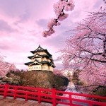 Arvore-Sakura-palacio-japones